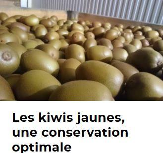 kiwicons.JPG
