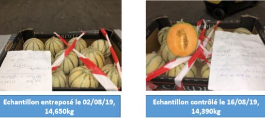 melontest.JPG